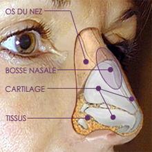 anatomie nasale docteur kestemont chirurgien face et cou nice